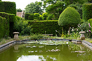 Nymphaea in the Pond Garden surrounded by Yew Hedge and topiary at Cothay Manor, Greenham, Wellington, Somerset, UK