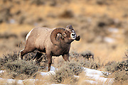 """Images from the 2011 """"Battling Bighorns"""" Photo Tour"""