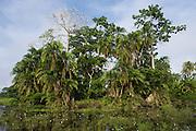 Scenic<br /> Lekoli River<br /> Republic of Congo (Congo - Brazzaville)<br /> AFRICA