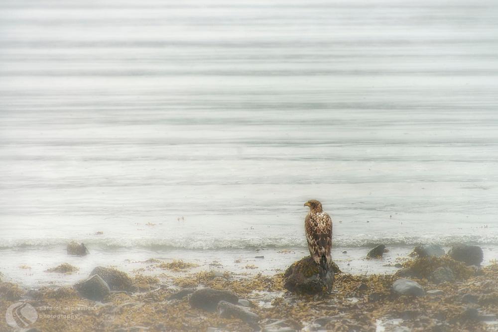 Seward Alaska beside Resurrection Bay