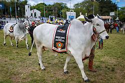 Desfile dos campeões durante a Inauguração oficial 38ª Expointer, que ocorre entre 29 de agosto e 06 de setembro de 2015 no Parque de Exposições Assis Brasil, em Esteio. FOTO: Jefferson Bernardes/ Agência Preview