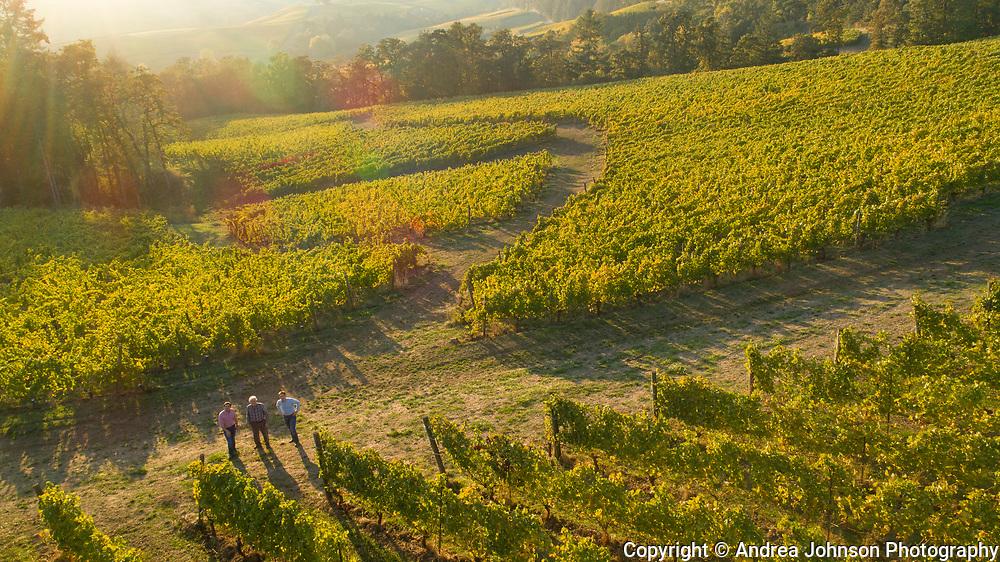 Aerial drone view over Résonance Vineyards, Yamhill-Carlton AVA, Willamette Valley, Oregon