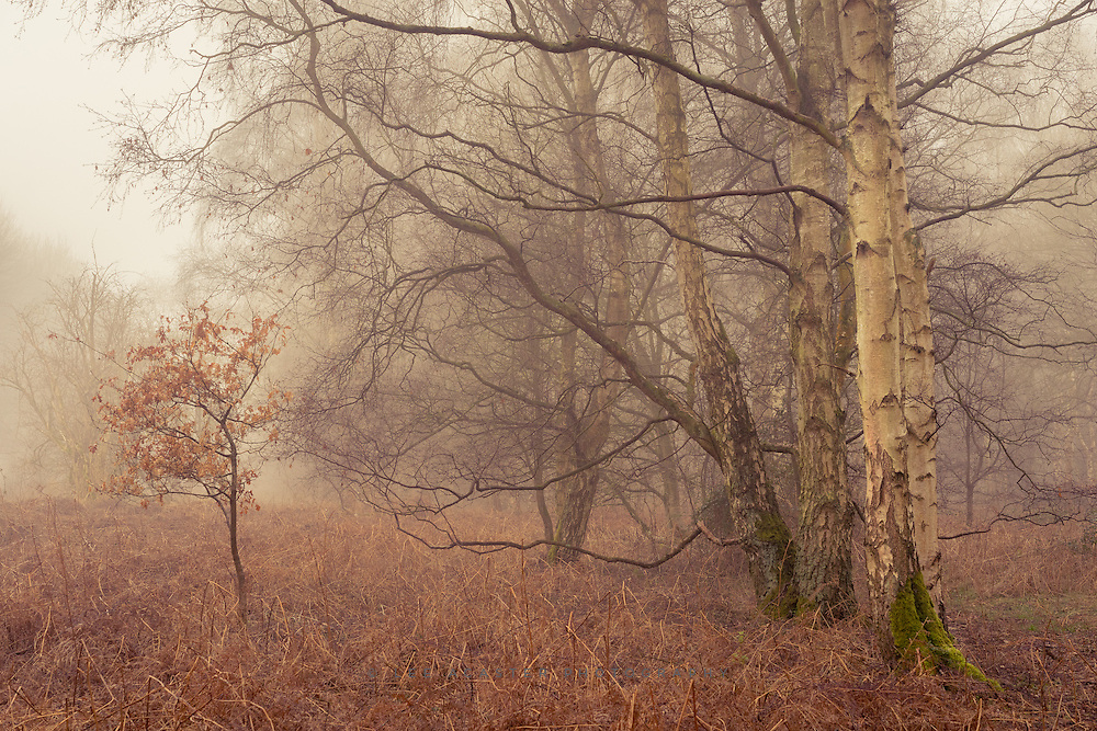 Had a bit more fog on Tuesday morning but it slipped away before got chance to make the most of it.