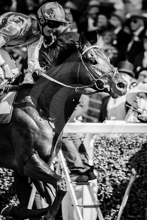 Biometric (H. Bentley) wins The Britannia Stakes at Royal Ascot, 20/06/2019, photo: Zuzanna Lupa