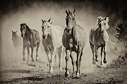 Small group of horses approaching through the dust.