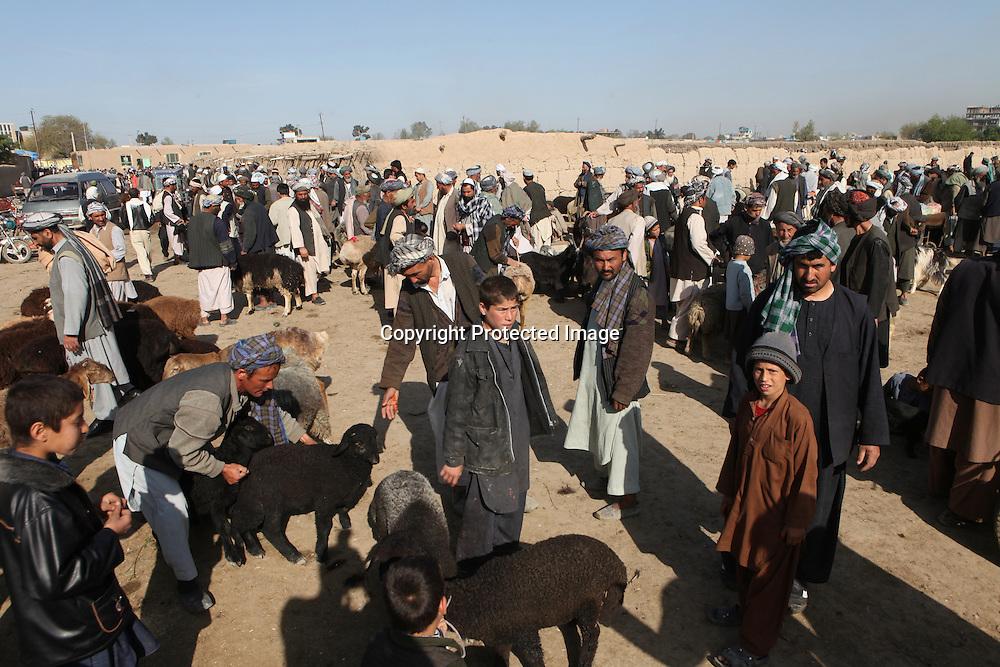 Animal market in Mazar-i-sharif, Afghanistan