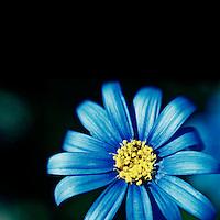 Lensbaby blues
