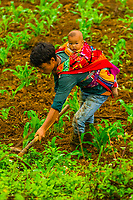 Farmer with a baby on his back working in the terraced fields of the Muong Hoa Valley, near Sapa, northern Vietnam.