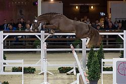 013, Nector vd Bisschop<br /> BWP Hengsten keuring Koningshooikt 2015<br /> © Hippo Foto - Dirk Caremans<br /> 23/01/16