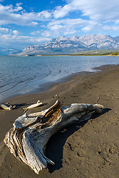 Driftwood on the beach alongside the Athabaska River in Jasper National Park beneath the towering peaks of the Canadian Rockies.