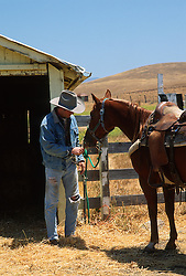 Cowboy Fixing The Reins On A  Horse In The Countryside