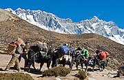 """Porters walk with a yak pack train beneath the mountain of Lhotse (27,940 feet), the world's fourth highest peak, in Sagarmatha National Park, Nepal. The south face of Lhotse rises 3.2 km (1.98 mi) in only 2.25 km (1.4 mi) of horizontal distance (averaging a 55 degree angle slope). Sagarmatha National Park was created in 1976 and honored as a UNESCO World Heritage Site in 1979. Published in """"Light Travel: Photography on the Go"""" book by Tom Dempsey 2009, 2010."""