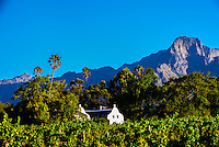 Allee Bleue Wine Estate, Groot Drakenstein, Cape Winelands (near Cape Town), South Africa.