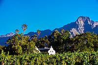 Allee Bleue Wine Estate, Groot Drakenstein, Cape Winelands (near Cape Town), South Africa.