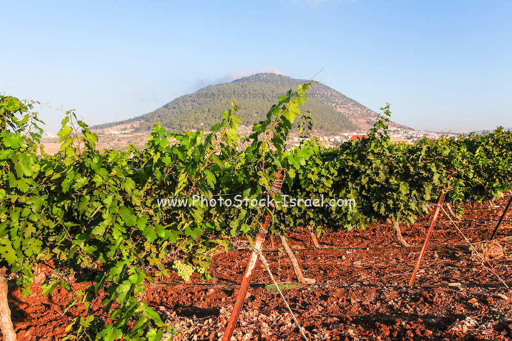 Mount Tabor is located in Lower Galilee, Israel, at the eastern end of the Jezreel Valley