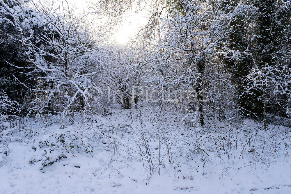 Winter scene in the snow in Canon Hill Park in Moor Green on 25th January 2021 in Birmingham, United Kingdom. Deep snow arrived in the Midlands giving some light relief and fun during the current lockdown for people who simply enjoyed the weather.