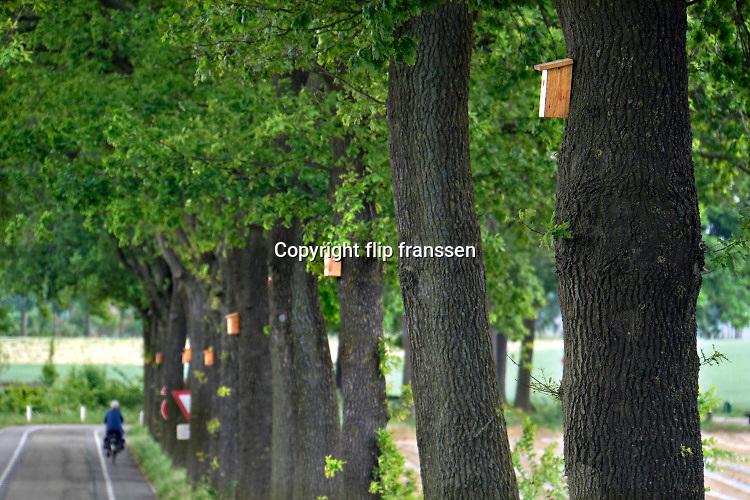 Nederland, Groesbeek, 20-5-2020  Op een rij eikenbomen langs een weg hangen nestkastjes om mezen te lokken die vervolgens de rupsen gaan eten .Op deze manier hoopt de gemeente de eikenprocessierups overlast tegen te gaan .Foto: Flip Franssen