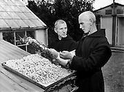 Mount St Joseph, Roscrea, Special, Fr Dermot Coleman (left), Silk Spinning. 02/09/1954