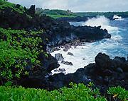 Green foliage of Beach Nuapaka, Scaevola taccada, along the rocky shore of Pa'ioloa Bay, Wai'anapanapa State Park, Island of Maui, Hawaii.