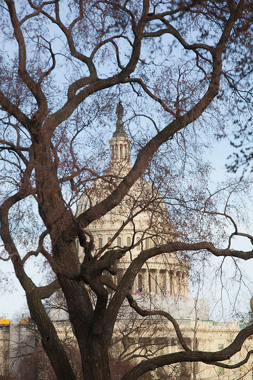 View of the Capitol Building through tree branches, National Mall, Washington DC.