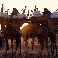 INTERNATIONAL | Western Sahara Arab Republic (Sahrawi)