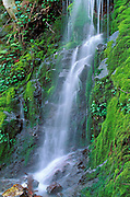 Moss covered cascade along the Rogue River, Siskiyou National Forest, Oregon.