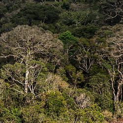 """Floresta (paisagem) fotografado em Santa Teresa, Espírito Santo -  Sudeste do Brasil. Bioma Mata Atlântica. Registro feito em 2016.<br /> <br /> <br /> <br /> ENGLISH: Forest Landscape photographed  in Santa Teresa, Espírito Santo - Southeast of Brazil. Atlantic Forest Biome. Picture made in 2016."""