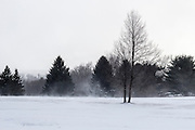 20170209_CU_Golf_Course_HOME_Trees_