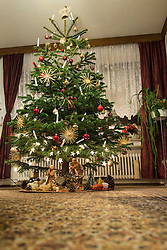 Decorated Christmas tree at home, Bavaria, Germany