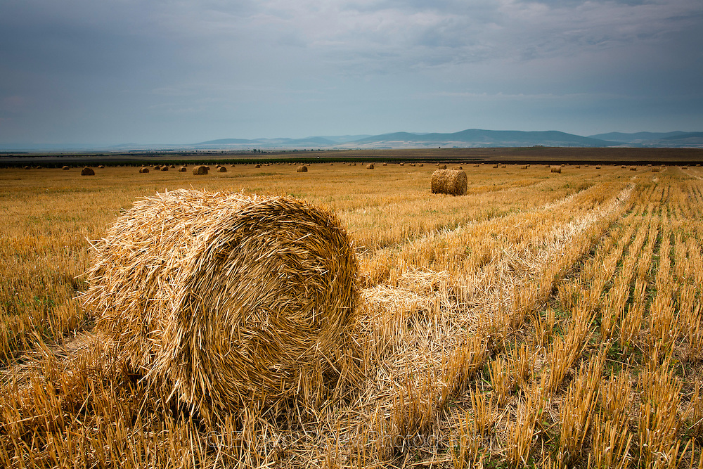 Bales of hay in cloudy weather