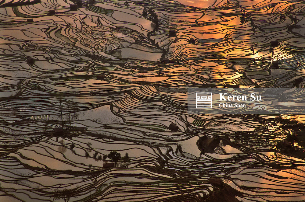Water filled rice terraces under sunset, Yuanyang, Yunnan, China