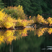 Pond with fall colors in Andover, Massachusetts
