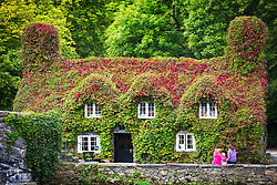© Licensed to London News Pictures. 24/08/2017. Llanrwst UK. Photo credit: Early signs of Autumn have started to appear as the Ivy leaves begin to turn red on the Tu-Hwnt-Ir Bont cafe on the banks of the River Conwy in the small town of Llanrwst, Wales. Andrew McCaren/LNP