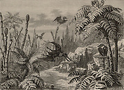 Scene during the Lias period, showing Pterodactyls, a dragonfly, Equisetums, and Tree Ferns.  From 'The Popular Encyclopaedia' (London, 1888). Engraving.