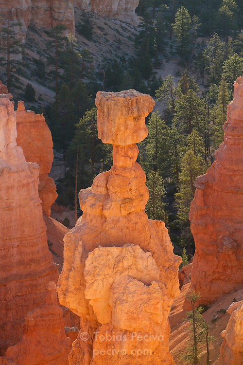 Early morning light on the Thor's Hammer rock formation, near Sunset Point in Bryce Canyon National Park, Utah.