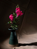 Flower still lives