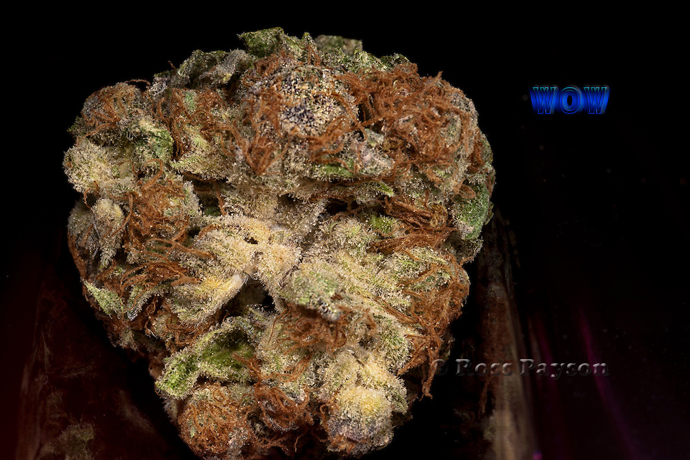 Medical marijuana strain, Wow. Photographed by professional photographer.