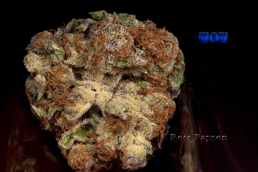 Medical marijuana strain, Wow. Photographed by professional photographer.
