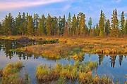 Wetland in autumn<br />Pakwash Provincial Park<br />Ontario<br />Canada