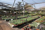 Garden Nursery