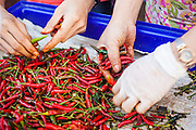 """26 SEPTEMBER 2012 - BANGKOK, THAILAND: Vendors sort hot chilies in Khlong Toey Market in Bangkok. Khlong Toey (also called Khlong Toei) Market is one of the largest """"wet markets"""" in Thailand. The market is located in the midst of one of Bangkok's largest slum areas and close to the city's original deep water port. Thousands of people live in the neighboring slum area. Thousands more shop in the sprawling market for fresh fruits and vegetables as well meat, fish and poultry.     PHOTO BY JACK KURTZ"""