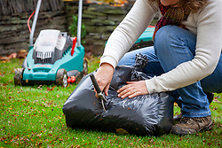 Making leaf mould. Picking up leaves using a lawn mower then putting them into a bin liner and piercing with a hand fork