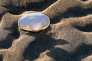 The inner glow of the shell, with the texture of the beach, caught my eye.