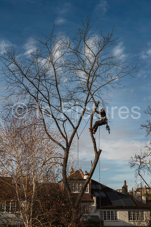Tree surgeon working in a private garden during the second national coronavirus lockdown on 17th November 2020 in London, United Kingdom. The new national lockdown is a huge blow to the economy and for individuals who were already struggling, as Covid-19 restrictions are put in place until 2nd December across England, with all non-essential businesses closed.