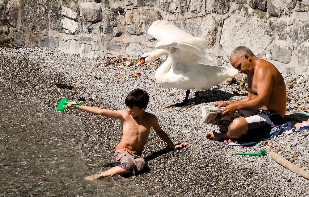 "a boy, a man, and a swan enjoy a small rocky beach on Lac Lemon (Lake Geneva).<br /> <br /> *Awarded ""Editor's Choice"" - NashvilleArts magazine 2013 photo competition"