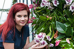 © Licensed to London News Pictures. 04/02/2016. London, UK.  4 February 2016. Kew horticulture staff member, Elisa Biondi, examines a phaleanopsis as preparations are made for the opening of Kew Gardens' 21st annual Orchid festival (6 February to 6 March).  The Princess of Wales Conservatory has been transformed to present a sensory journey through the striking flora of Brazil during Carnival Season and includes two enormous rainforest tree structures as well as figures in the pond representing carnival dancers.<br />  Photo credit : Stephen Chung/LNP