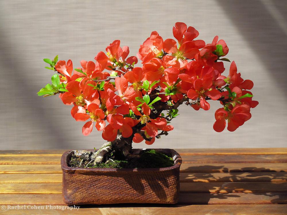 """Bonsai and Shadow"""