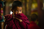 Young Buddhist monk at the morning ceremony (puja) at Thiksey Monastery, Ladakh, India