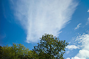 Cirrostratus, a form of Cirrus cloud, in blue sky