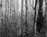 Swamp walk with Kristen and Angela in the Everglades behind  Clyde Butcher's Big Cypress Gallery. Image taken with a Leica X2 camera (ISO 100, 24 mm, f/4.5, 1/160 sec).